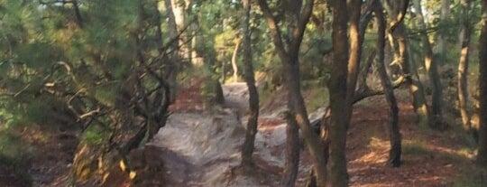 Bosque De La Primavera is one of Reto 100 ZMG.