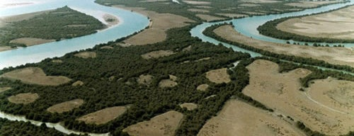 Mangrove Forests is one of Iran Natural Venues | جاذبههای طبیعی ایران.