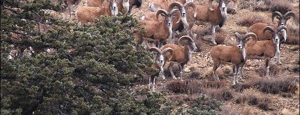 Golestan National Park | پارک ملی گلستان is one of Iran Natural Venues | جاذبههای طبیعی ایران.
