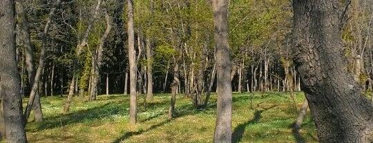 Florya Atatürk Ormanı is one of İstanbul'daki Park, Bahçe ve Korular.