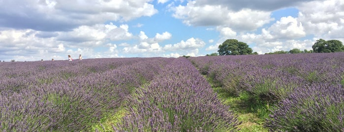 Mayfield Lavender Farm is one of To Do.