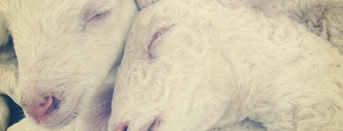 Swiss Sheep Farm is one of Travel.