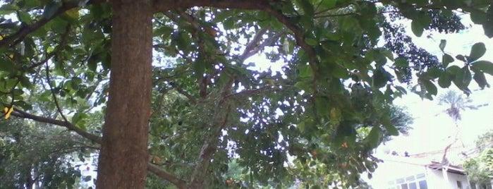 Mercosul do Gama is one of Salvador.