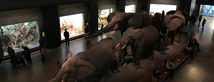 Akeley Hall of African Mammals is one of istiyorumgidicem!!.