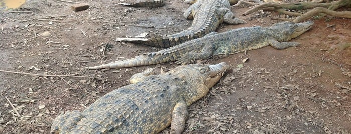 Taman Buaya & Rekreasi (Crocodile Park) is one of Melaka.