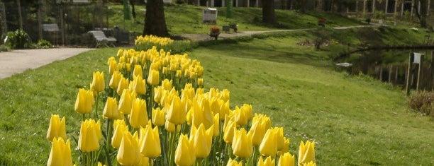 Parks & Outdoors : Leiden