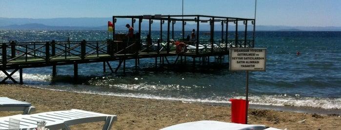 New Moon Beach Club is one of Burası.