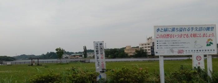 牛久沼水辺公園 is one of サイクリング.