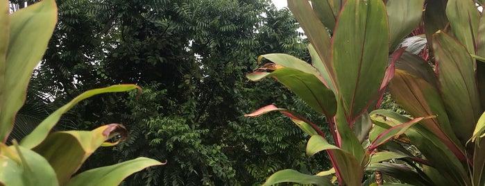 Taman Negara Johor Gunung Ledang | Gunung Ledang Johor National Park is one of Johor/JB :Cafe connoisseurs Must Visit.
