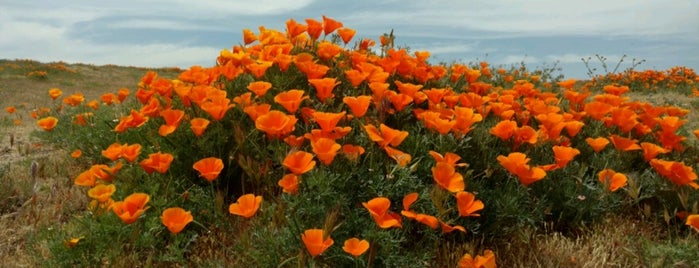 Antelope Valley Poppy Reserve is one of LA/SoCal.