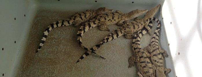 Crocodile Farm and Nature Park is one of Filipinler-Manila ve Palawan Gezilecek Yerler.