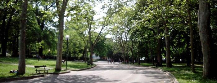 Il verde a Bologna