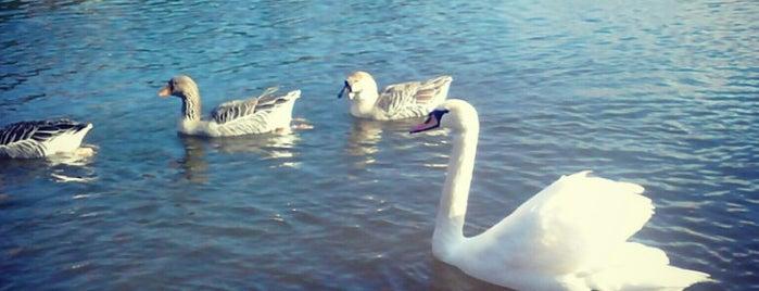 Beletsi Lake is one of List-1.