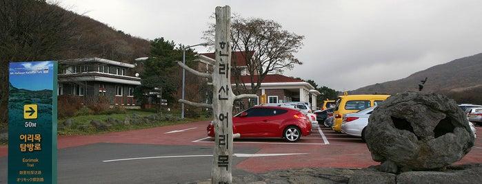 Hallasan Eorimok is one of Jeju.