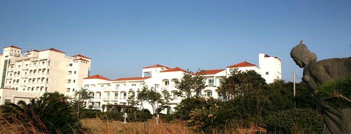 제주 금호리조트 is one of Jeju.