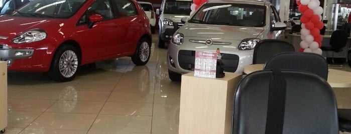 Fiat Itavema is one of Dealers.