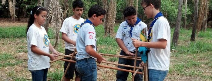 Grupo Escoteiro Arara Azul - 15GO is one of Utilidade Pública.
