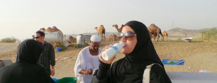 Camel Farm is one of Must visit Place and Food in Saudi Arabia.