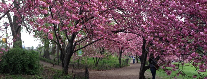 Central Park Cherry Blossoms is one of New York.