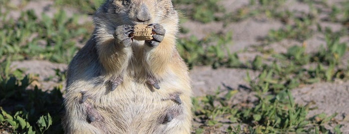 Prairie Dog Ranch is one of Rapid City, SD.