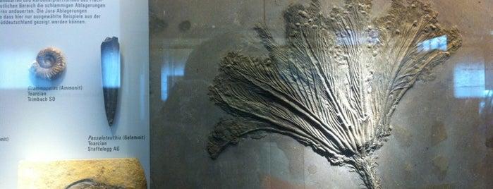 Paläontologisches Institut is one of Gratis ins Museum.