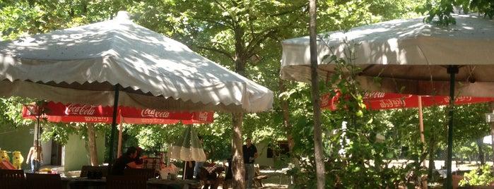 Yeşil Sera Cafe is one of The places I love in Türkiye.