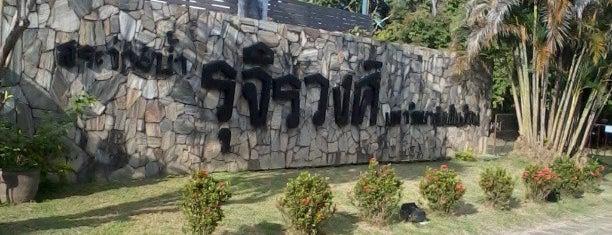 สระว่ายน้ำรุจิรวงศ์ is one of Chiang Mai.