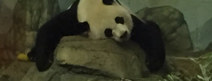 Giant Panda House is one of DC.