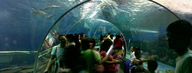 Manila Ocean Park is one of Philippine🇵🇭.