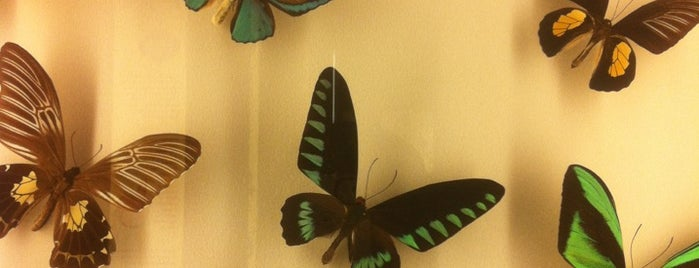 Audubon Insectarium is one of Places I've been.