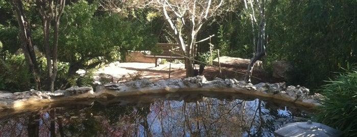Zilker Botanical Gardens is one of smart Custom Nation Austin.