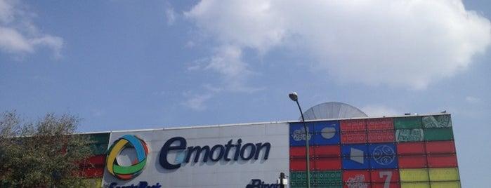 Casino emotion chihuahua