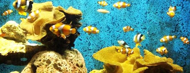 Manila Ocean Park is one of Mabuhay ♥.