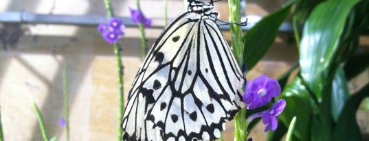Butterflies and Plants - Partners in Evolution is one of DC Museum.
