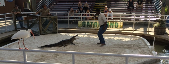 Gator Wrestlin' is one of Places checked in too.