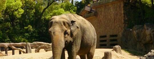 Tennoji Zoo is one of Japan footprints.