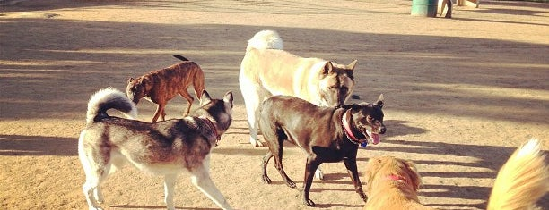 Silver Lake Dog Park is one of For K9 friends in SFValley+.