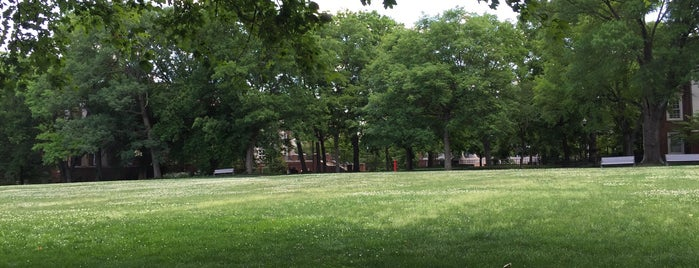Magnolia Lawn is one of Commencement 2012.