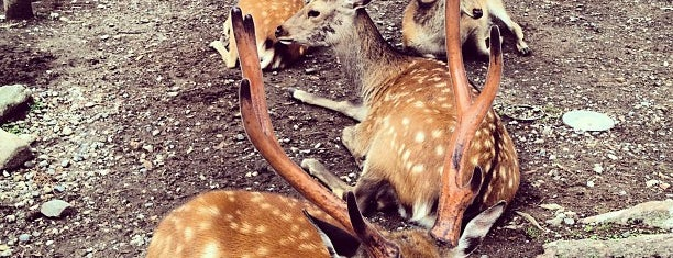 Nara Park is one of 日本の都市公園100選.