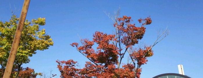 九条公園 is one of Great outdoor in NARA.