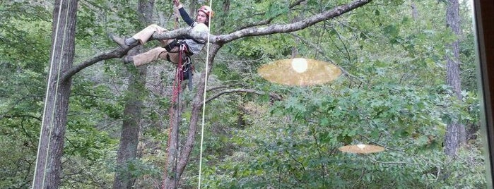 Navitat Canopy Adventures is one of Best Places to Check out in United States Pt 8.