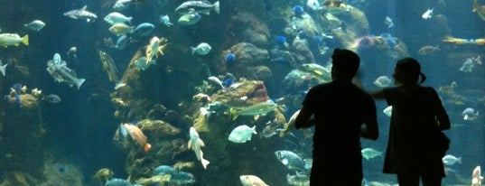 California Academy of Sciences is one of The 15 Best Places for Tours in San Francisco.