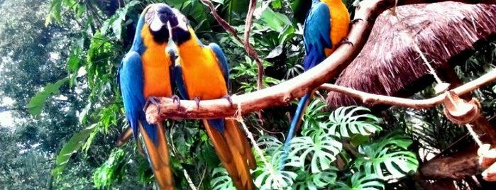 Parque das Aves is one of Foz do Iguaçu - PR.