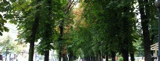 Парк им. Т. Г. Шевченко is one of Kiev_travel.