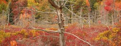 Finzel Swamp is one of Mountain Maryland Photo Tips.