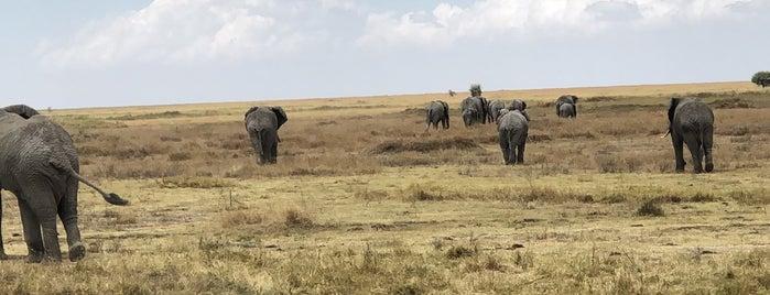Serengeti National Park is one of Bucket List ☺.