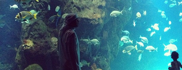 The Scientific Center is one of kuwait must visit places.