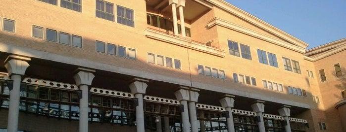 Universidade Católica Portuguesa is one of Tania.