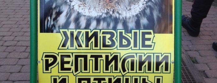 Нижегородский экзотариум is one of Культура.