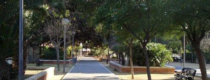 Parque del Jardin Botanico is one of Alicante (plazas y jardines).